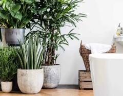 8 самых неприхотливых растений для дома, за которыми практически не нужно ухаживать