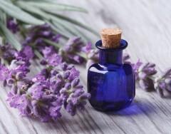 Эфирное масло, которое избавит вас от бессонницы, домашних вредителей и головной боли
