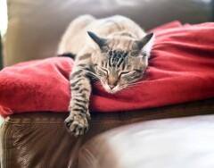 10 лайфхаков, узнав которые вы никогда не выбросите старую подушку