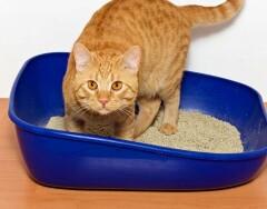 Дезинфицируем кошачий лоток домашними средствами: просто, дешево и надолго