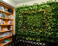 Озеленение интерьера: как сделать фитостену своими руками