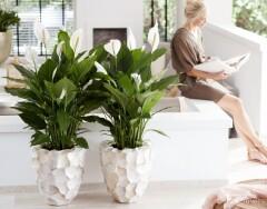 11 странных вещей, которые любят ваши комнатные растения