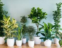 Эффективные способы увлажнить воздух в помещении: подбираем на любой вкус и кошелек