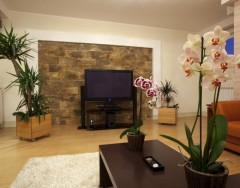 Как украсить интерьер комнатными цветами: полезные советы