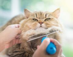 Если кошачья шерсть повсюду: как от нее избавиться
